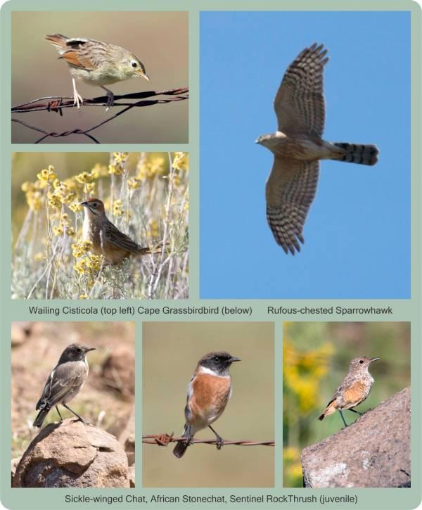 24_EC birding_hawk