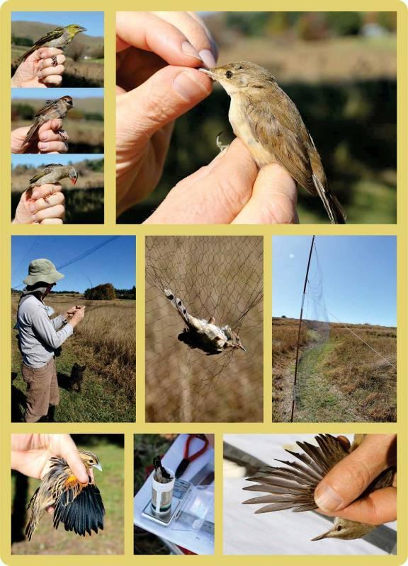 04_bird-ringing_web